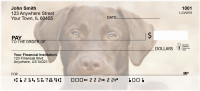 Chocolate Lab Personal Checks | BAC-45