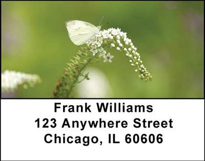 Butterflies in Nature Address Labels | LBANI-17