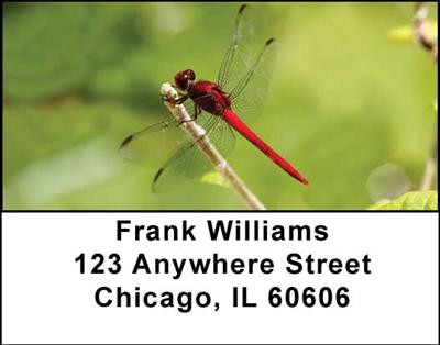 Dragonflies Address Labels | LBANI-26