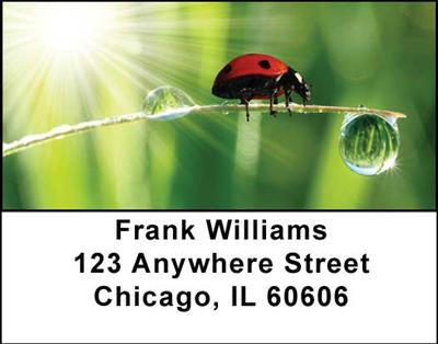 Ladybugs Address Labels | LBANI-32