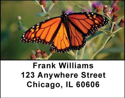 Monarch Butterflies Address Labels | LBANI-38