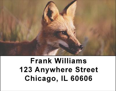 Sly as a Fox Address Labels | LBANI-75