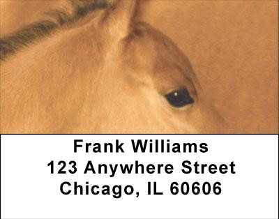 Horses Up Close and Personal Address Labels | LBANI-83