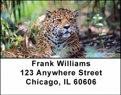 Jaguar Address Labels | LBANI-90