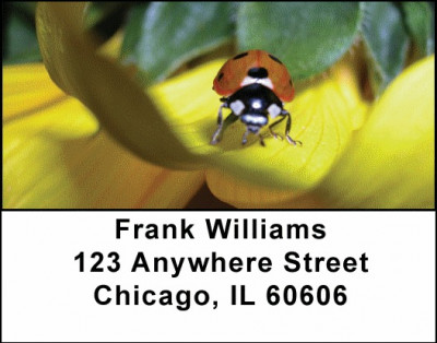Spot the Ladybug Address Labels | LBANI-91