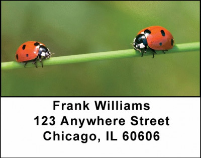 Lovely Ladybugs Address Labels | LBANJ-10