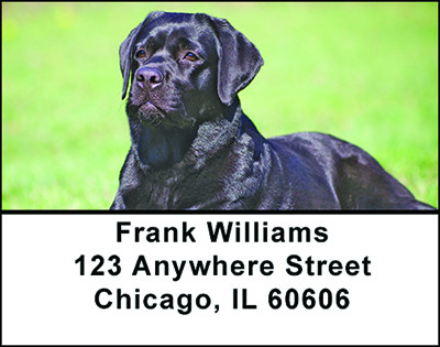 Black Lab Address Labels | LBBAC-40